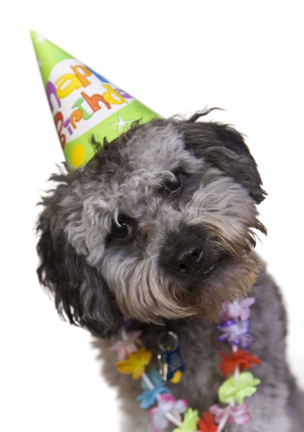 Verjaardagskaart Kind Hond Met Feestmuts Gefeliciteerd